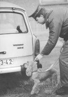 Berlin, Rauschgiftspürhund im Einsatz (Bundesarchiv, Bild 183-1989-1128-013 / Uhlemann, Thomas / CC-BY-SA 3.0)